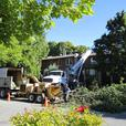 Calgary Tree Service. 349,000