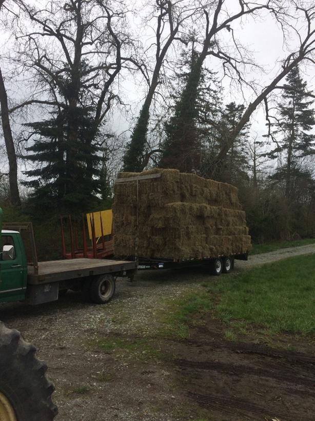 2nd cut hay