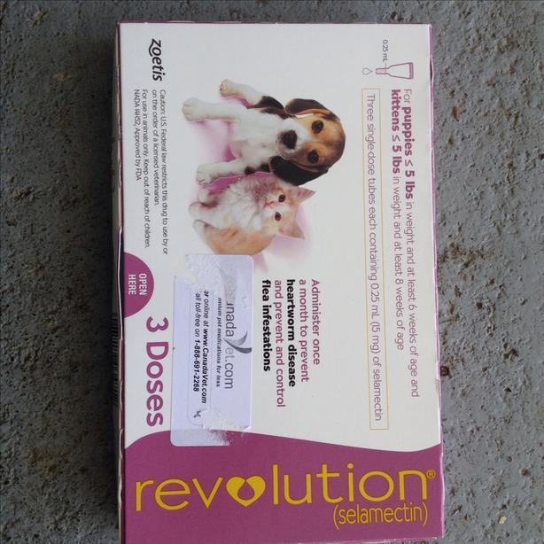Revolution flea treatment Saanich, Victoria