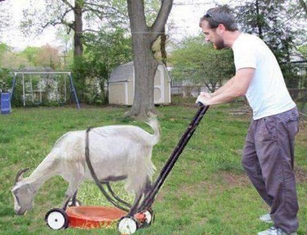 40$/hr gas powered yard equipment repair & recycling