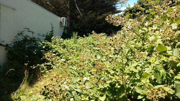 Brush/ bush/grass overgrown Removal