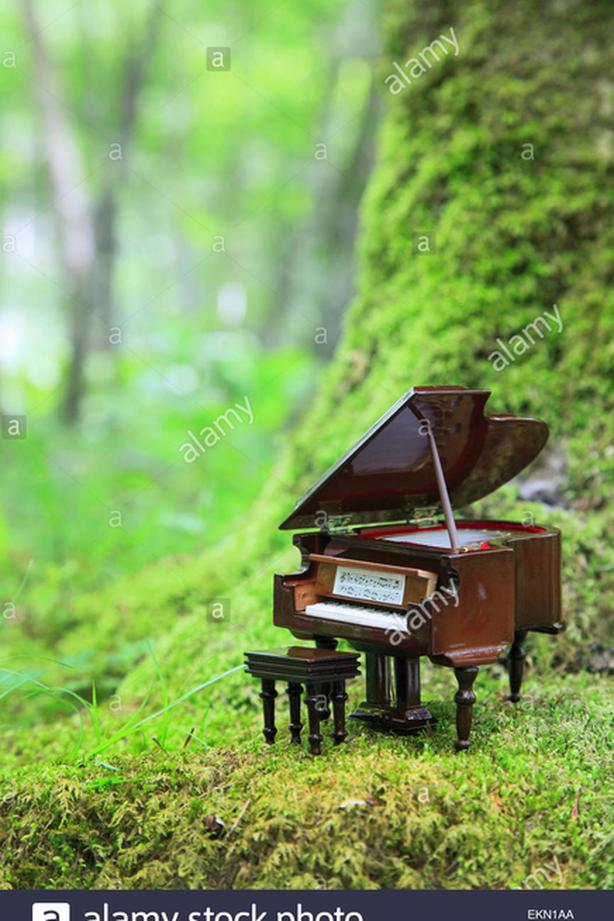 FOR-TRADE: Music lessons for landscaping services