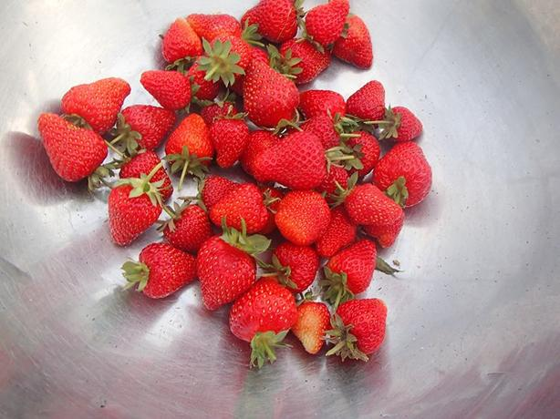 Mail Order Probiotically Grown Everbearing Strawberry plants