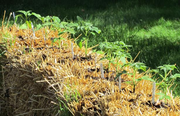 WANTED: Straw bales for Strawbale Gardening