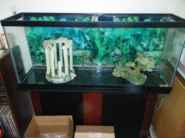 55-Gallon Aquarium for Sale