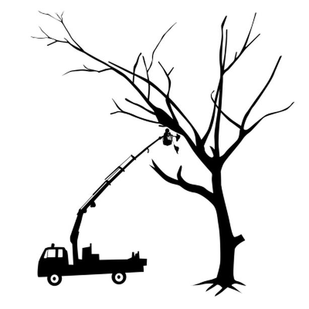 Only ~ $59 ~ Trees Removal Calgary ~ Trees Cutting Calgary