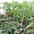 ORGANIC PLANT SALE * REGENT PARK *