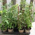 ORGANIC PLANT SALE * REGENT PARK * 268 KING STREET