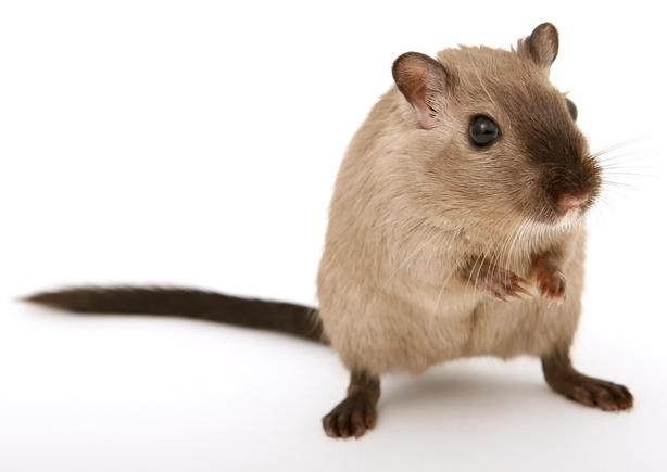Only ~ $59 ~ Pest Control Edmonton Best Prices
