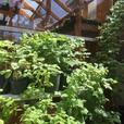 Organic Veggie Starters and Herbs