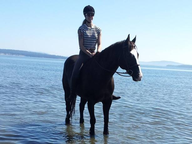Several fun and safe horses for lease