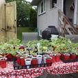 Tomato plants-Squash plants