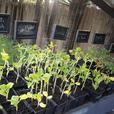 Bedding Plants Final Sale