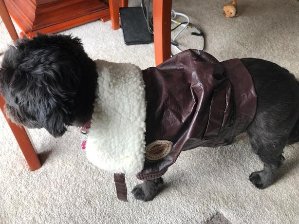 SUPER CUTE! Doggy Bomber jacket