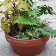 planted garden pots