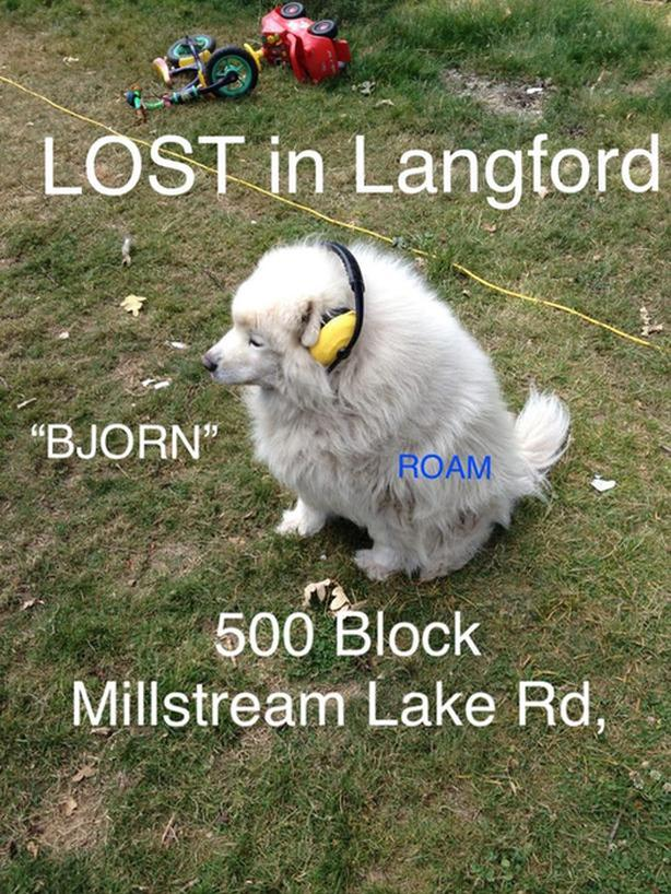 ROAM ALERT LOST DOG 'BJORN'