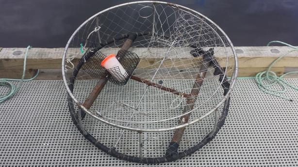 "40"" Heavy Duty Crab Trap"