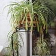 Wide range of house plants $10 to $50