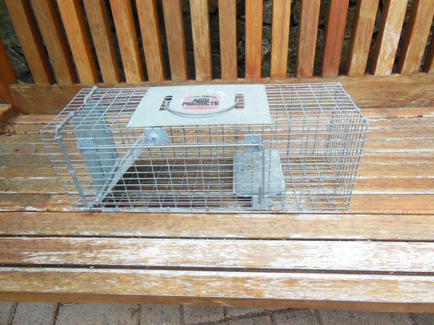 Single door Humane Little Giant Live Squirrel Trap