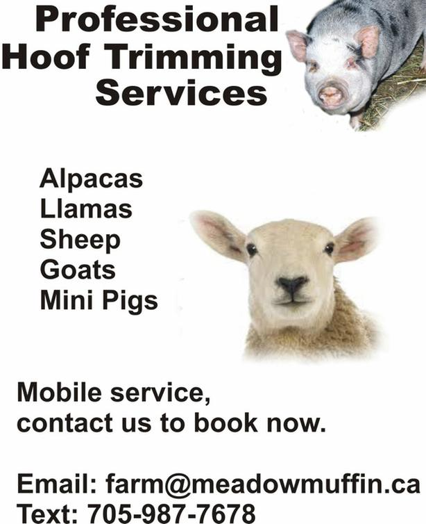 HOOF TRIMMING SERVICES, sheep, goats, alpacas, mini pigs...