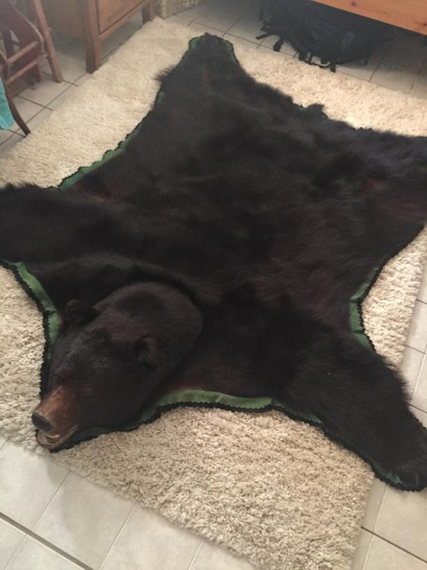 sale store the mounted mount with brown for bear rug head taxidermy