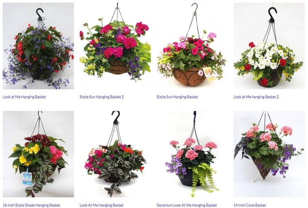 Easy to Maintain Hanging Basket Flowers