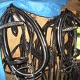 Horses and Tack Sale