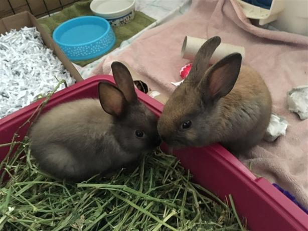 Hope (and Sunshine) In Foster Care - Rex Rabbit