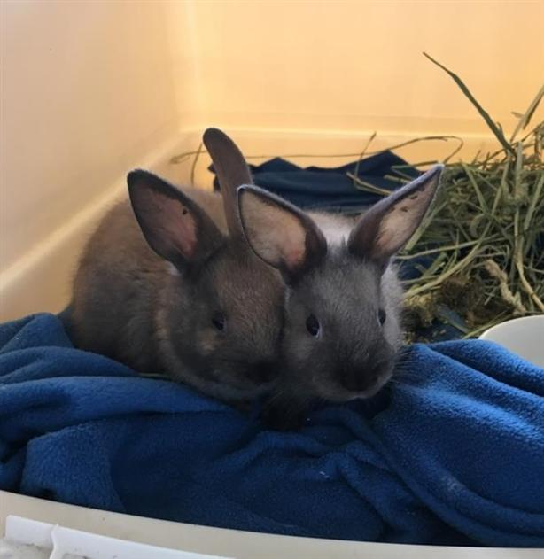 Sunshine (and Hope) In Foster Care - Rex Rabbit