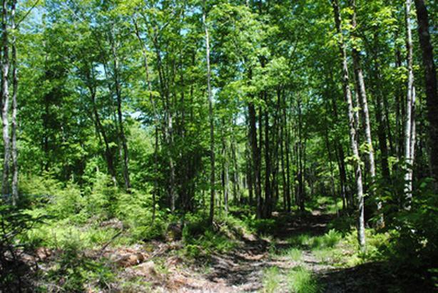 Looking for farmland and woodlots for some clients.