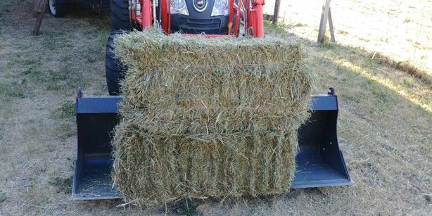 1rst cut hay