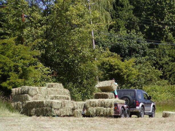 Bedding or Mulching Hay.