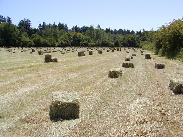 Fresh local 1st cut hay, call 250-858-8514