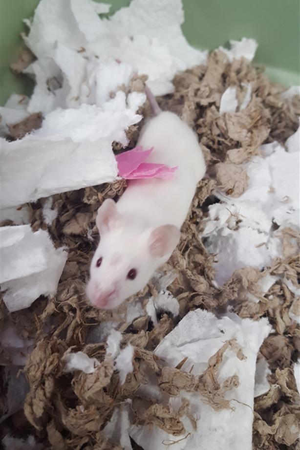 Nick - Mouse Small Animal