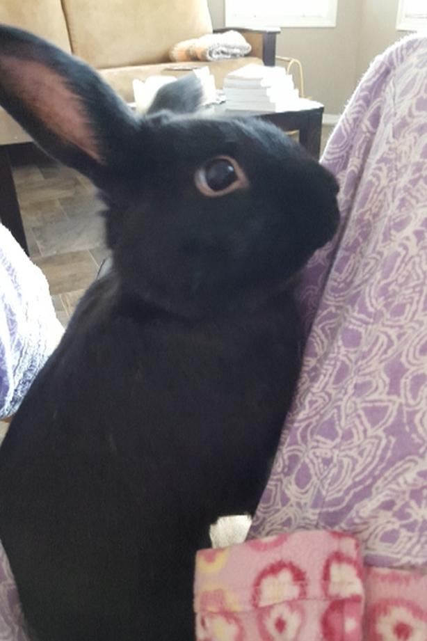Max the Bunny