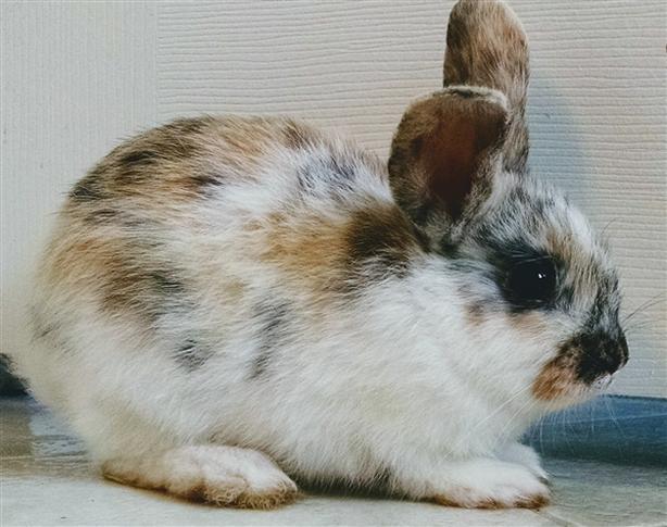 Mott The Hoople - American Rabbit