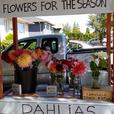 Flower stand  1747 Townley Street at Pearl Street Victoria