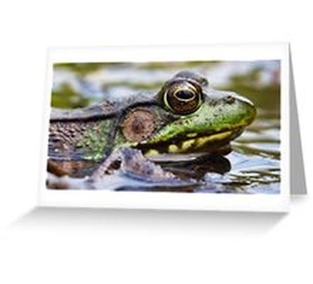 Bullfrog, up close and personal! On a variety of gift items