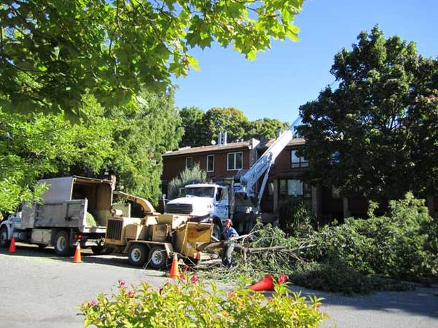 Calgary Tree Removal Business 299,000