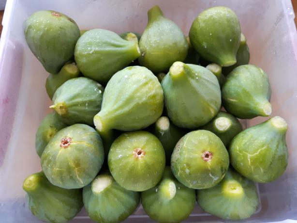 lots of figs to sell