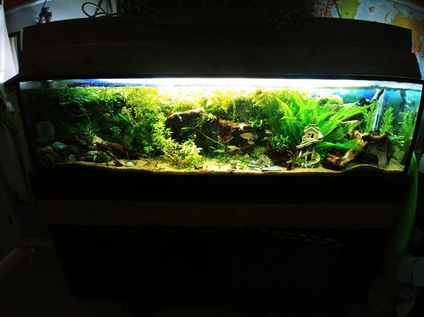 100 gallon aquarium fully stocked West Shore: Langford