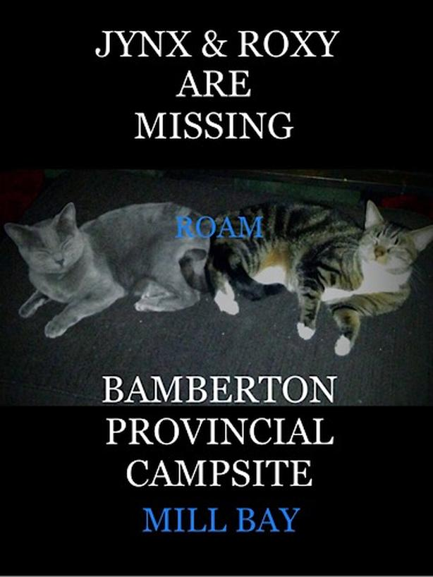 ROAM ALERT LOST CATS 'JYNX & ROXY'