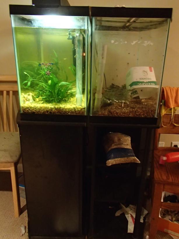 FREE: aquariums