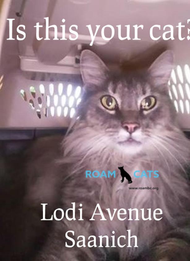 ROAM ALERT - Roaming Cat - Lodi Avenue