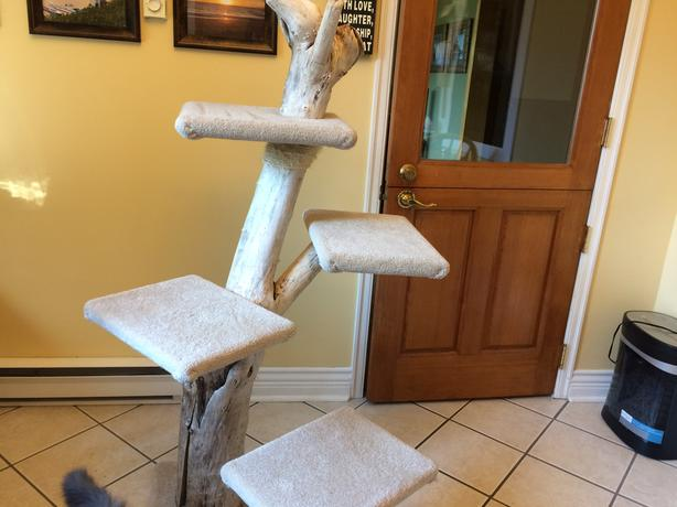 9a02aa5c44a8 Cat stand cat tree cat perch Gently Used 4 feet tall North Saanich ...