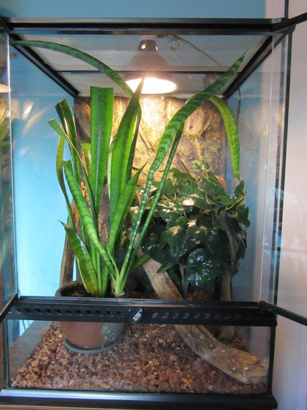 Crested Gecko With Terrarium Saanich Victoria
