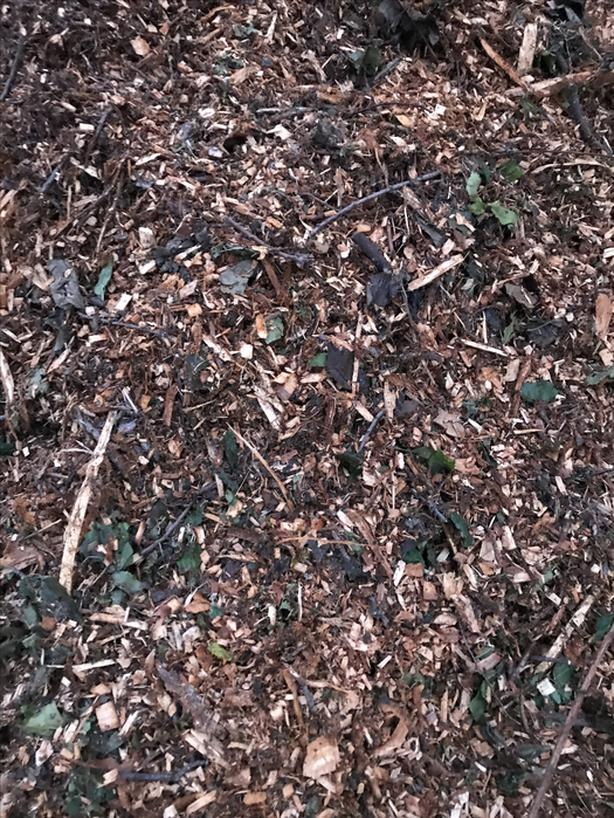 Free Mulch From An Elm Tree Victoria City Victoria