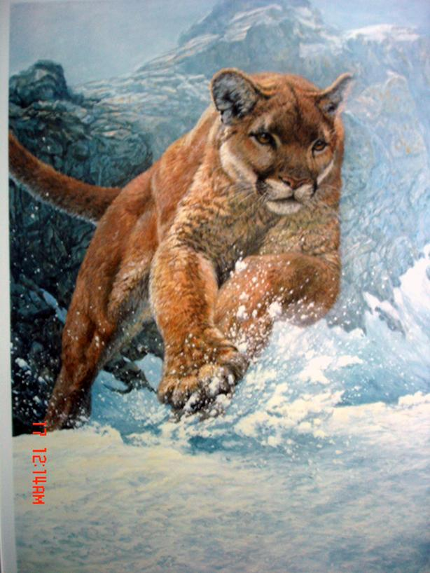 Cougar Run Lithograph Limited Edition Print