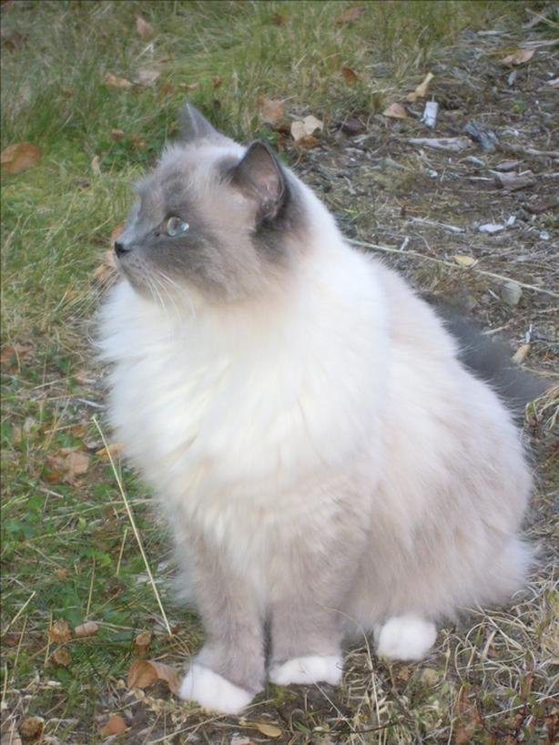 LOST CAT - $1,000 to you if you bring her home