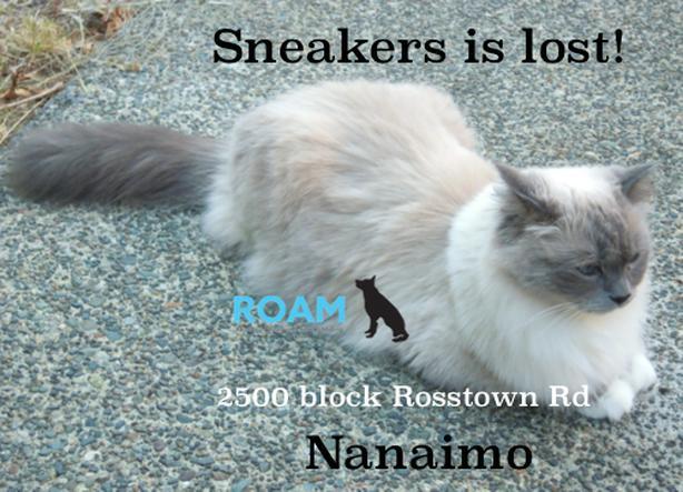 ROAM ALERT LOST CAT ' SNEAKERS'